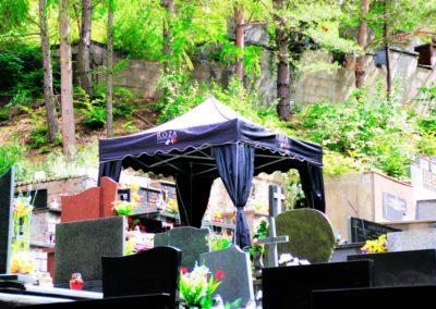 roza na cmentarzu